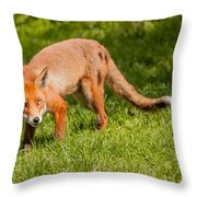 A British Red Fox Throw Pillow
