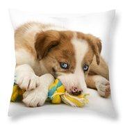 Border Collie Puppy Throw Pillow