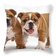 Bulldog Puppies Throw Pillow