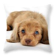 Dachshund Pup Throw Pillow by Jane Burton
