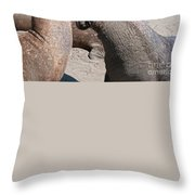 Elephant Seal Colony On Big Sur  Throw Pillow
