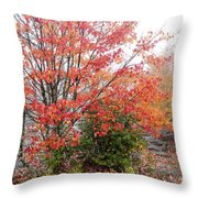 Fall Color Along The Highland Scenic Highway Throw Pillow