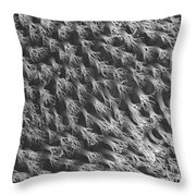 Gecko Foot Pads Throw Pillow