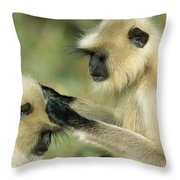 Hanuman Langur Semnopithecus Entellus Throw Pillow