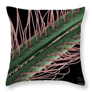 Luna Moth Antennae, Sem Throw Pillow