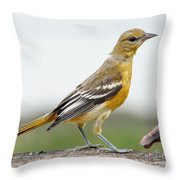 Oriole Throw Pillow