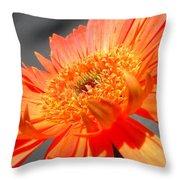 6192-001c Throw Pillow