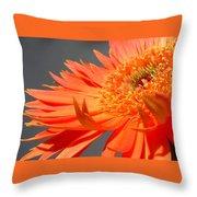6192-011 Throw Pillow