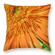 6224-1 Throw Pillow