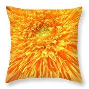6226c Throw Pillow