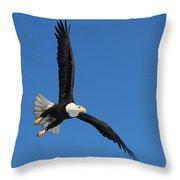 Alaska Bald Eagle Throw Pillow