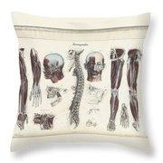 Anatomie Methodique Illustrations Throw Pillow