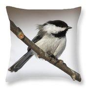 Blackcapped Chickadee Throw Pillow