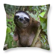 Brown-throated Three-toed Sloth Throw Pillow by Suzi Eszterhas