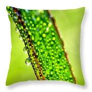 Dewdrops On Lemongrass Throw Pillow