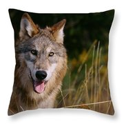 Gray Wolf Throw Pillow