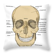 Illustration Of Anterior Skull Throw Pillow by Science Source