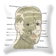 Illustration Of Facial Muscles Throw Pillow
