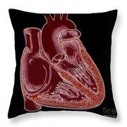 Illustration Of Heart Anatomy Throw Pillow