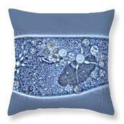 Paramecium Caudatum Throw Pillow