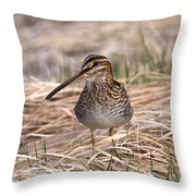 Wilsons Snipe Throw Pillow