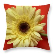 7709-001 Throw Pillow