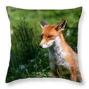 A British Red Fox Throw Pillow