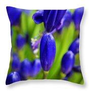 Agapanthus Campanulatus Throw Pillow