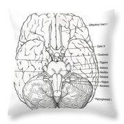 Illustration Of Cranial Nerves Throw Pillow