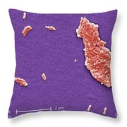 Salmonella, Sem Throw Pillow