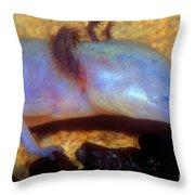Texas Blind Salamander Throw Pillow