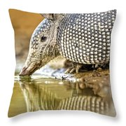 9 Banded Armadillo Throw Pillow