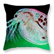 Water Flea Daphnia Magna Throw Pillow