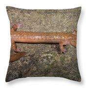 West Virginia Spring Salamander Throw Pillow