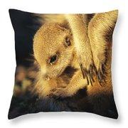 A Baby Meerkat Snuggles Throw Pillow