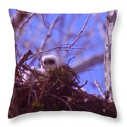 A Baby Red Tail Gazing From Its Nest Throw Pillow