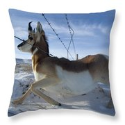 A Barbed Wire Fence Is An Obstacle Throw Pillow