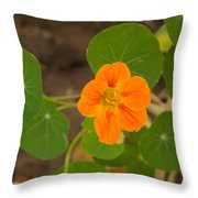 A Beautiful Orange Trumpet Shaped Flower With Green Leaves Throw Pillow