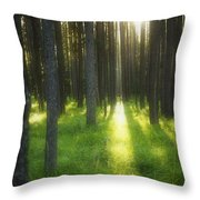 A Beautiful Wooded Area Throw Pillow