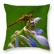 A Beauty On A Beauty Throw Pillow