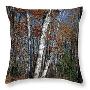 A Birch Radiating Its White Beauty In The Forest Throw Pillow