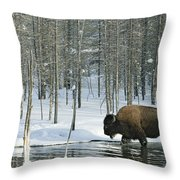 A Bison Stands In A Cold  Stream Throw Pillow