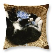 A Black-and-white Domestic Short-hair Throw Pillow