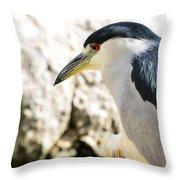A Black-crowned Night Heron  Throw Pillow