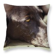 A Black Lab Lounges In The Afternoon Throw Pillow