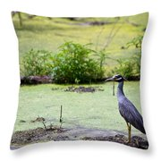 A Blue Bird In A Wetland -yellow-crowned Night Heron  Throw Pillow