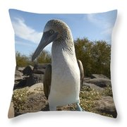 A Blue-footed Booby Of The Galapagos Throw Pillow