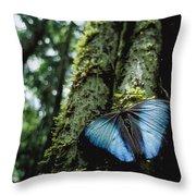 A Blue Morpho Butterfly Throw Pillow