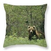 A Brown Bear In Tall Grasses Throw Pillow