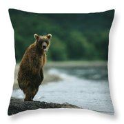 A Brown Bear Standing At Waters Edge Throw Pillow